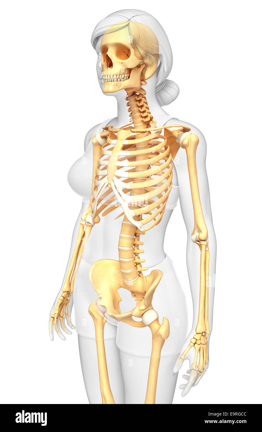 Illustration Of Human Skeleton Side View Stock Photo 74891164 Alamy