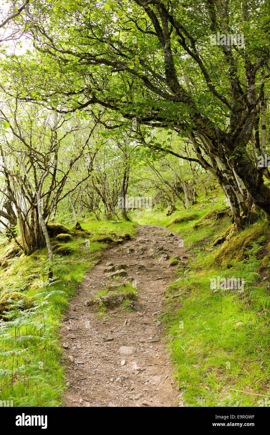 Empty pathway part of a country walk nature trail at Inverkirkaig in the Highlands of Western SCOTLAND - Stock Image