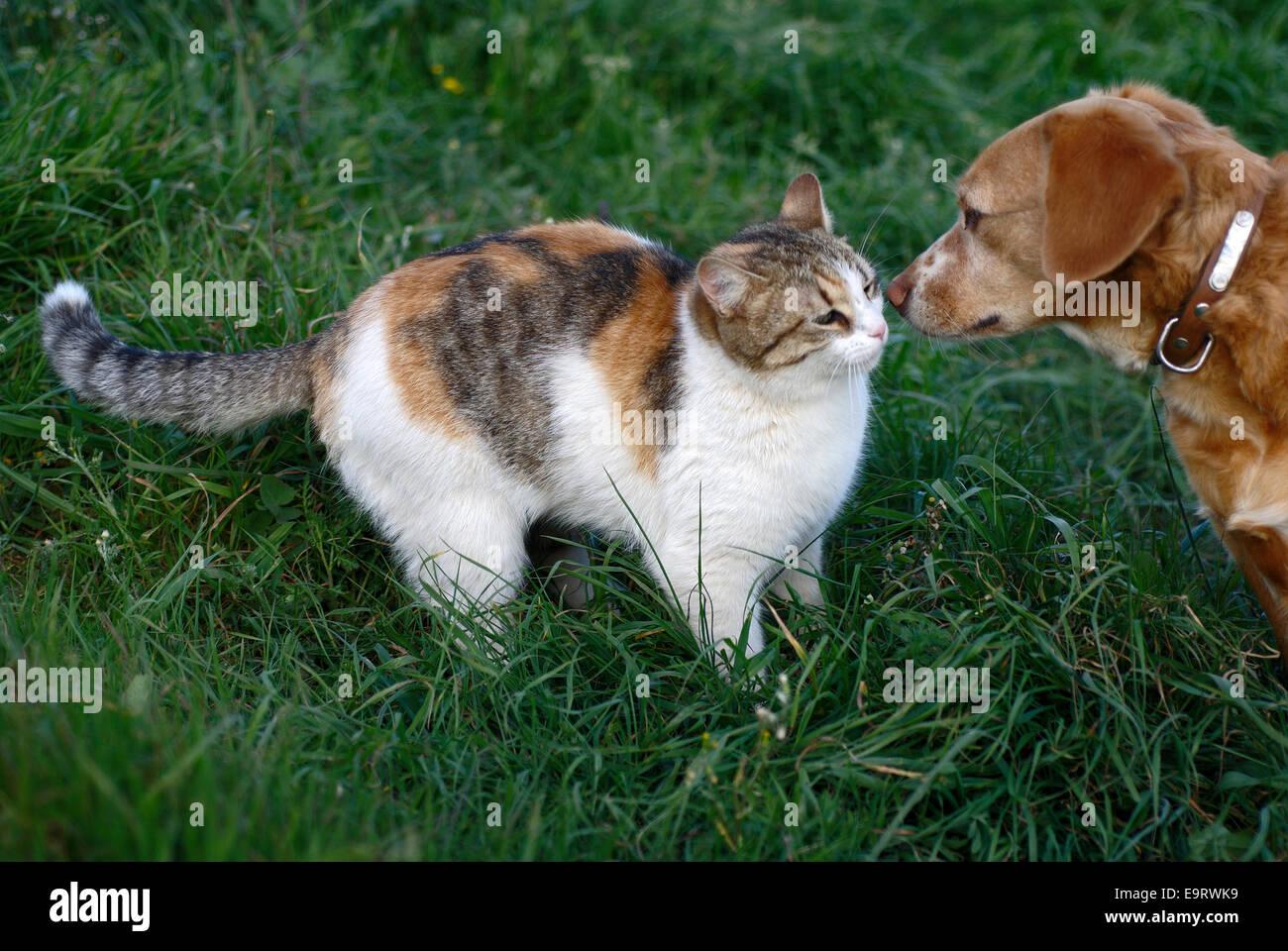 Hund und Katze beschnuppern sich - Stock Image