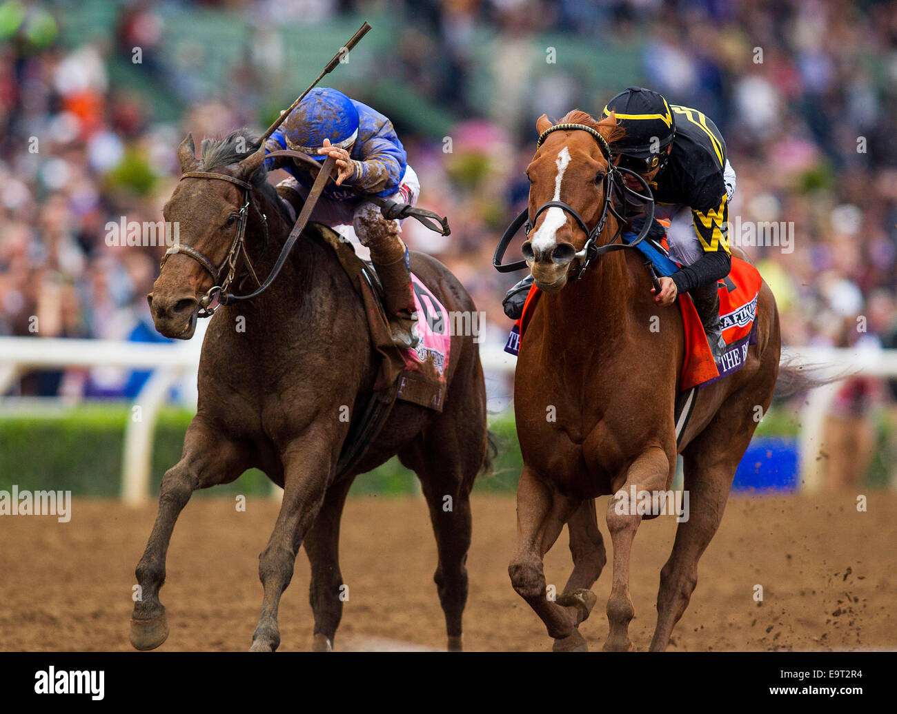 Arcadia, CA, USA. 1st Nov, 2014. November 01 2014: Judy the Beauty, ridden by Mike Smith and trained by Wesley Ward, - Stock Image