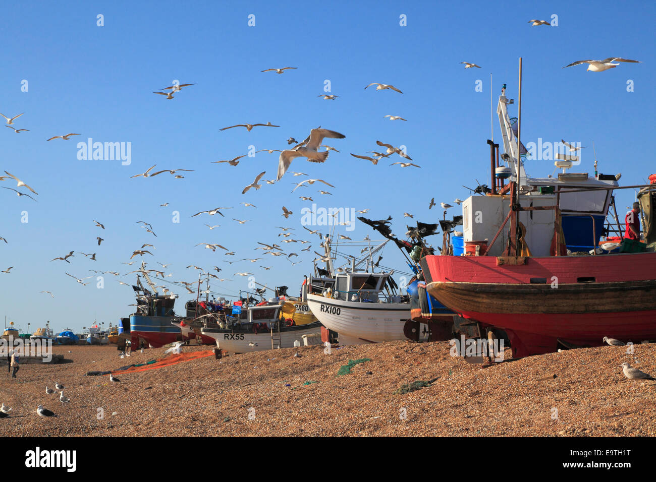 Seagulls flock over Hastings fishing boats on the Stade beach. Hastings has the biggest beach-launched commercial - Stock Image