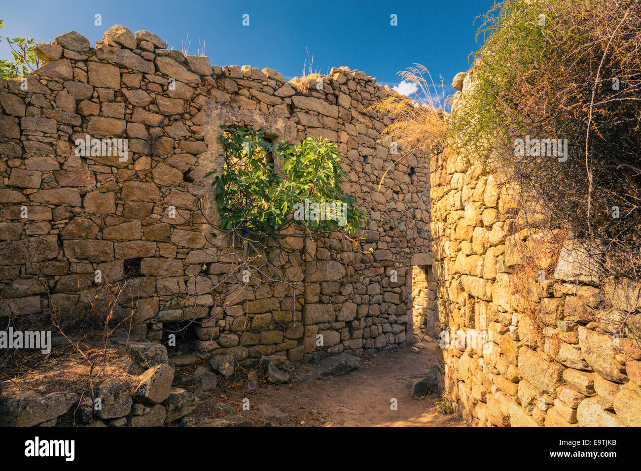 Old walls in the ruins of Occi, Corsica - Stock Image