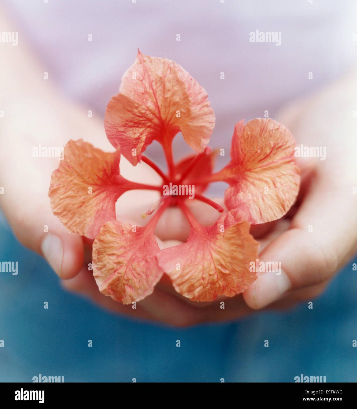 Flower in Girl's Hand - Stock Image