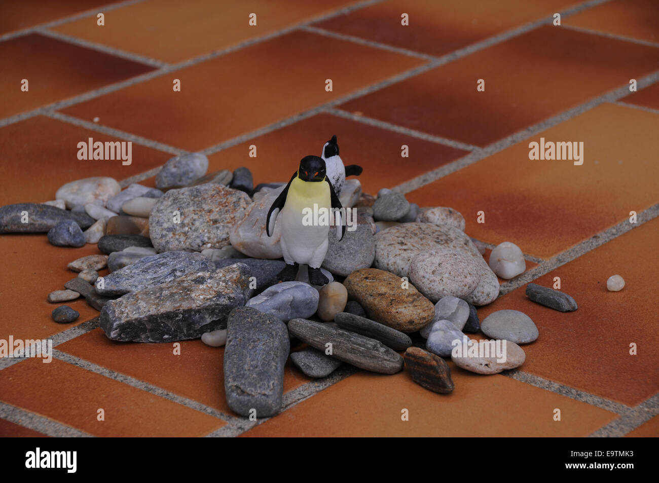 Male penguins collects rocks to impress the female penguins. Even toy penguins does... - Stock Image