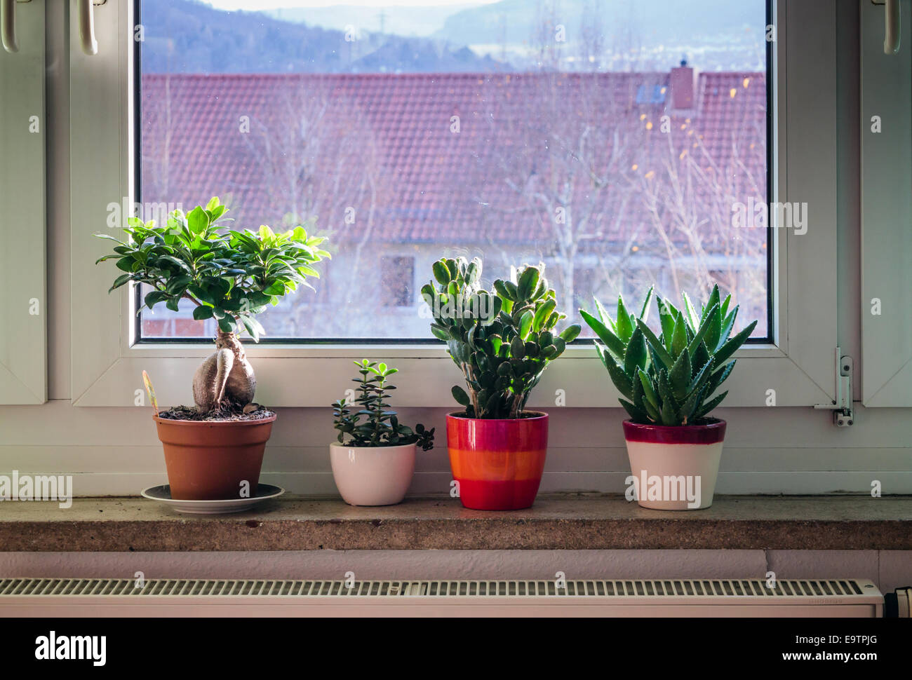 Four potted plants on a window cill - Stock Image