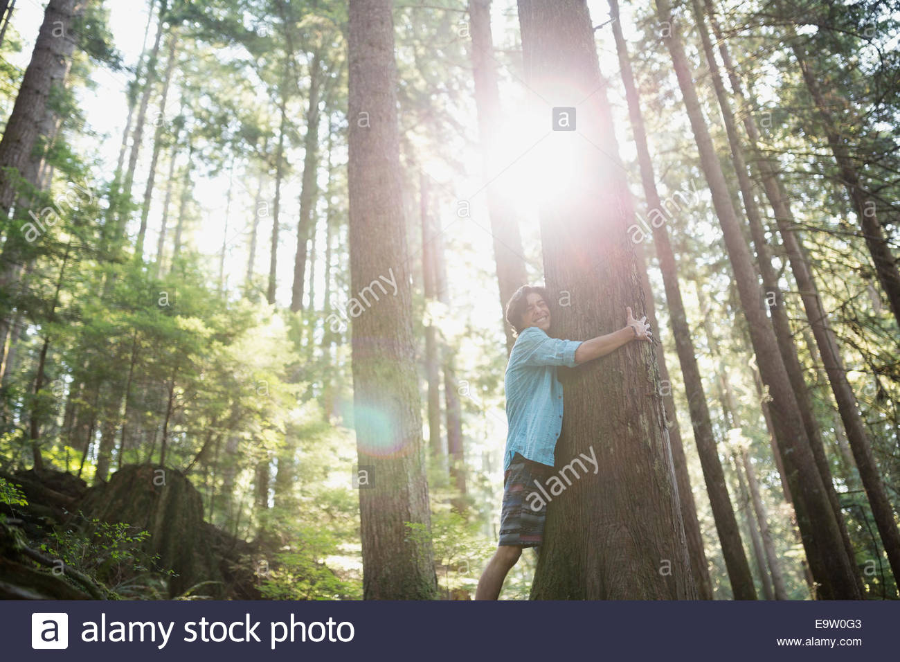 Teenage boy hugging tree in sunny woods - Stock Image
