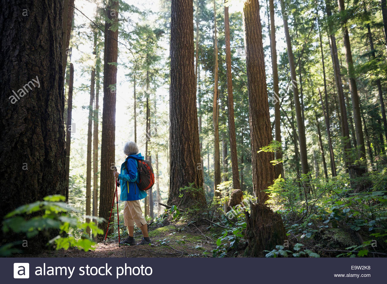 Senior woman hiking among trees in woods - Stock Image