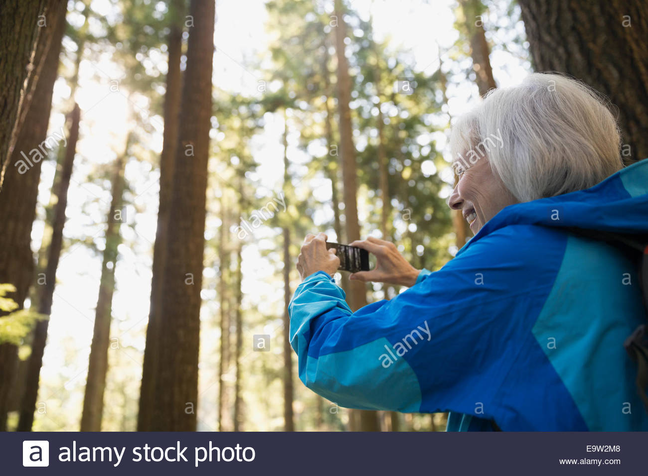 Senior woman photographing trees in woods - Stock Image