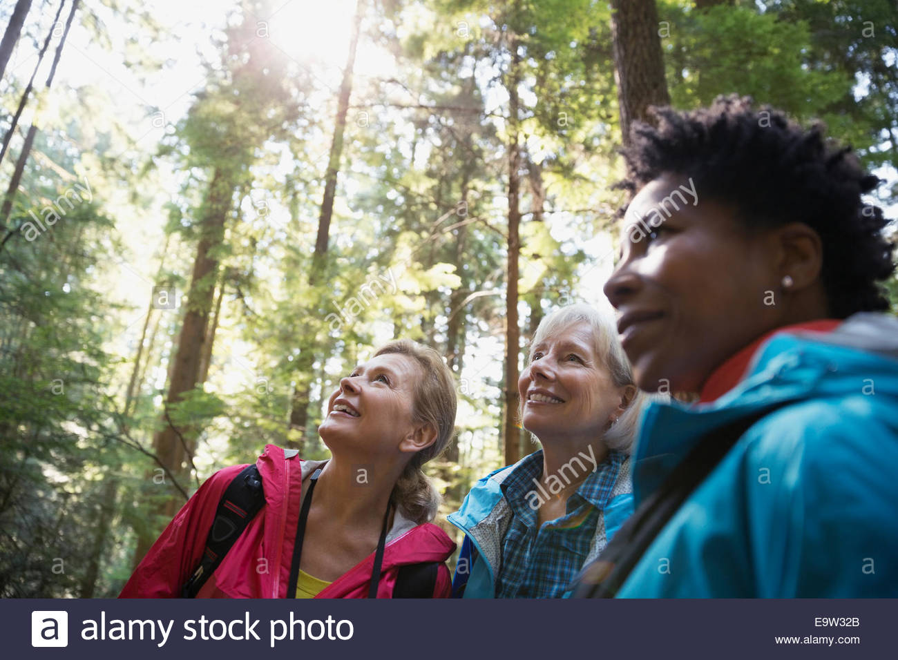 Curious women looking up in trees in woods - Stock Image