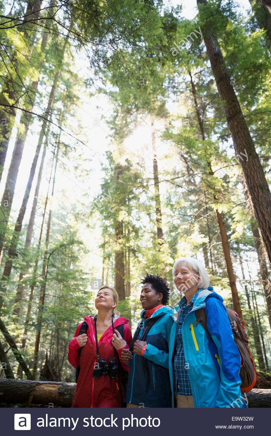 Women hiking below trees in woods - Stock Image