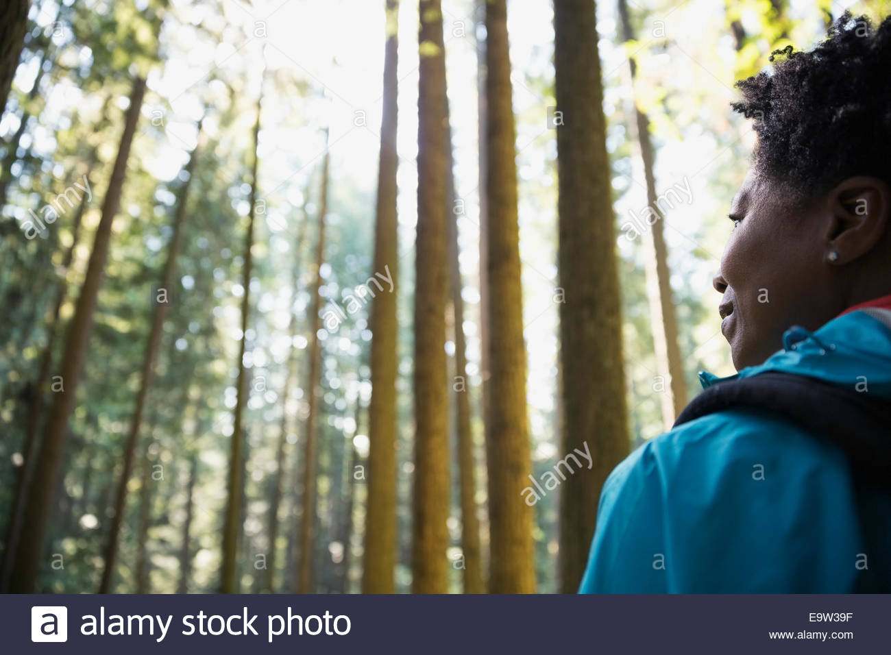 Pensive woman looking at trees in woods Stock Photo