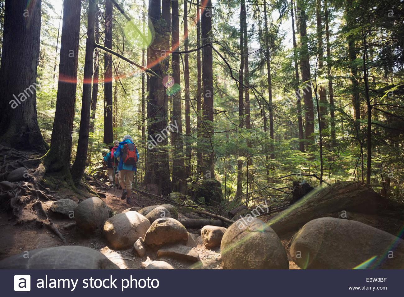 Women hiking below trees in sunny woods - Stock Image