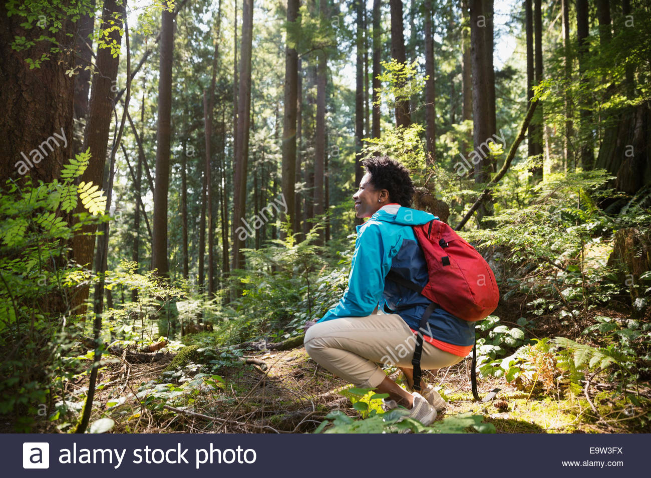 Woman with backpack crouching in sunny woods - Stock Image
