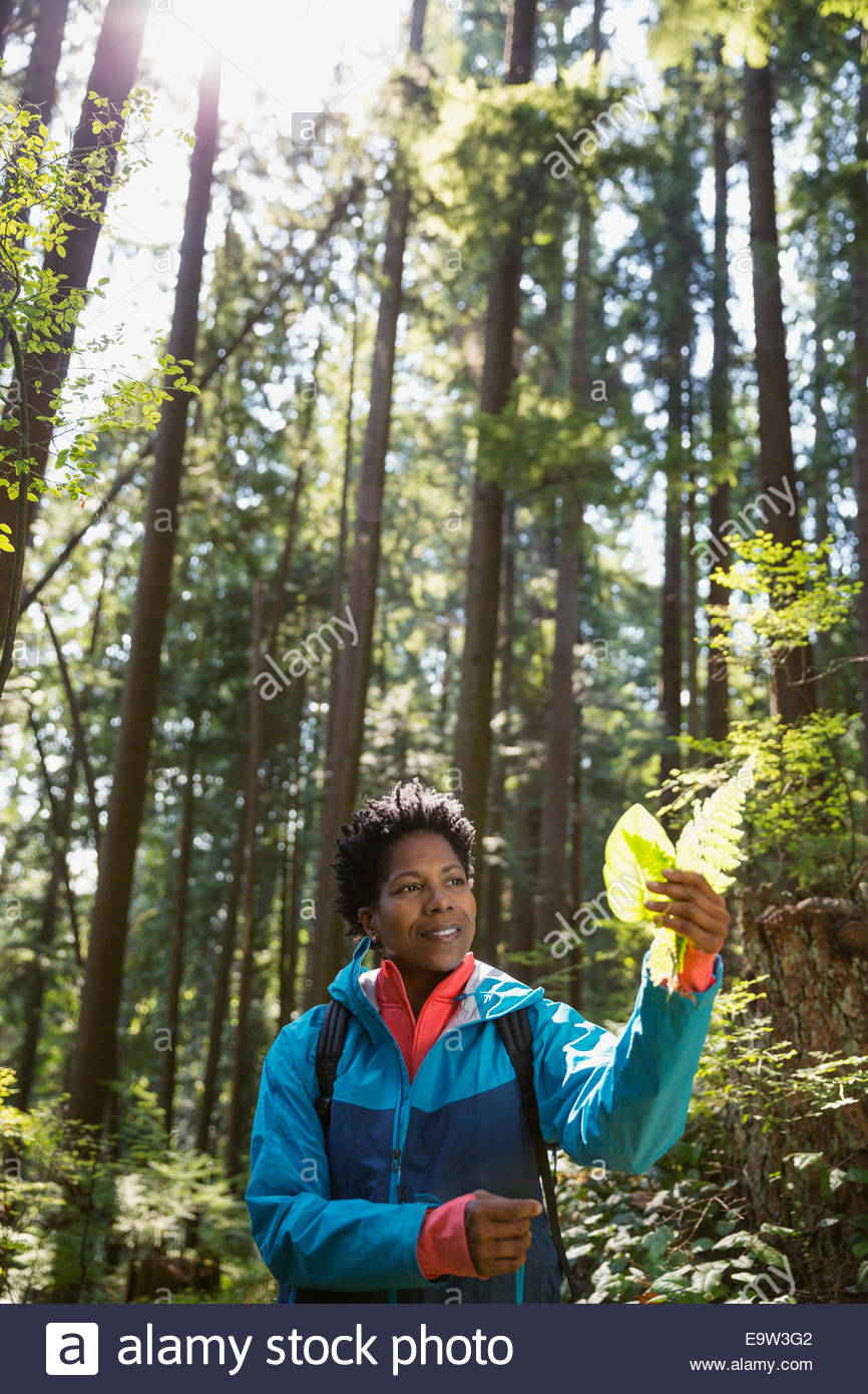 Curious woman examining leaf in woods - Stock Image