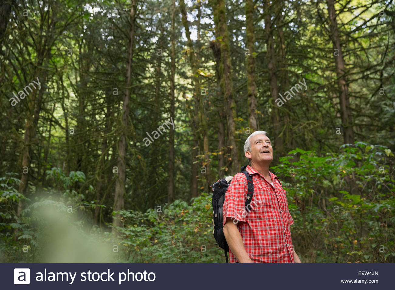 Man looking up at trees in woods - Stock Image