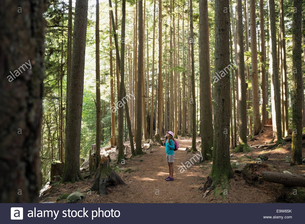 Girl hiking on trail in woods - Stock Image