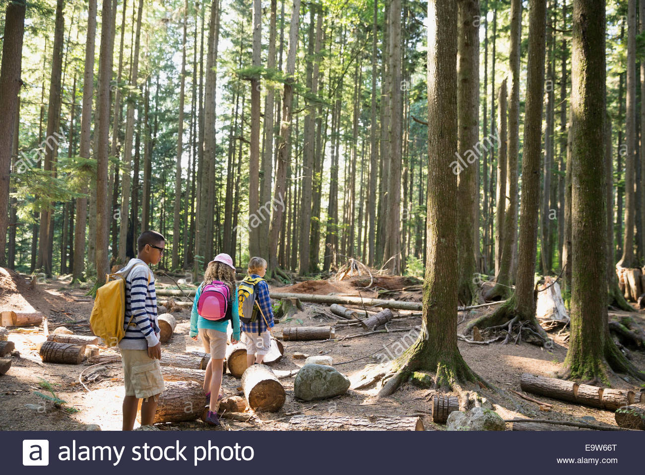 Boys and girl hiking in woods - Stock Image