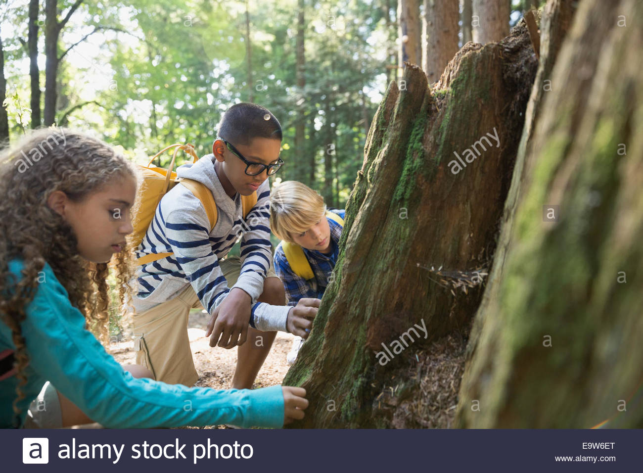 Boys and girl examining tree trunk in woods - Stock Image