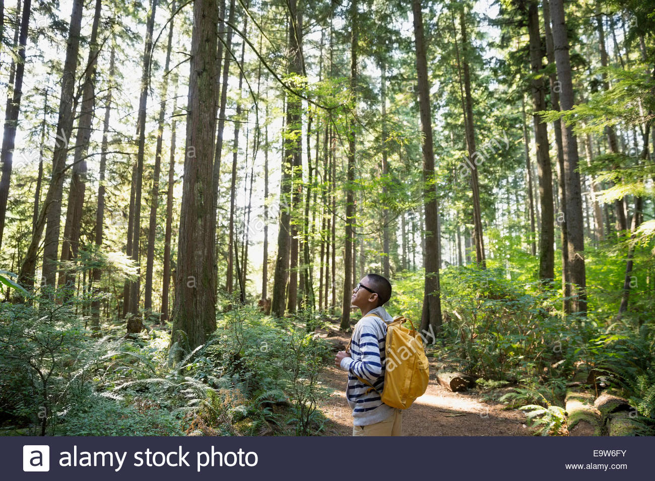 Curious boy looking up at trees in woods - Stock Image