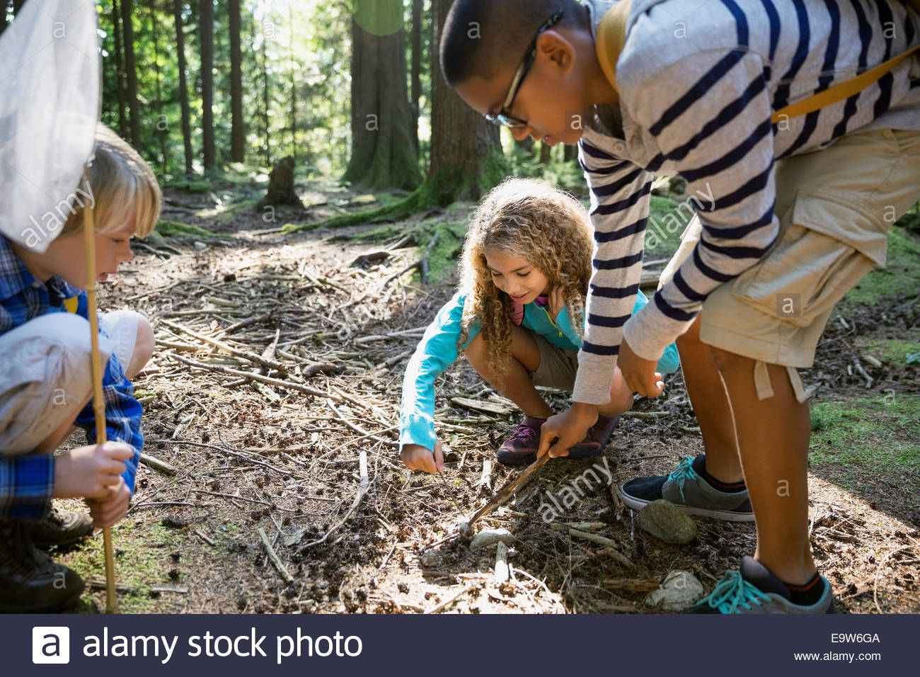 Children poking at ground with sticks in woods - Stock Image