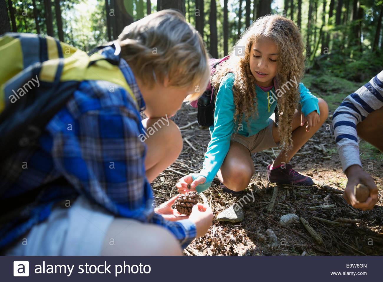 Children examining pine cone in woods - Stock Image
