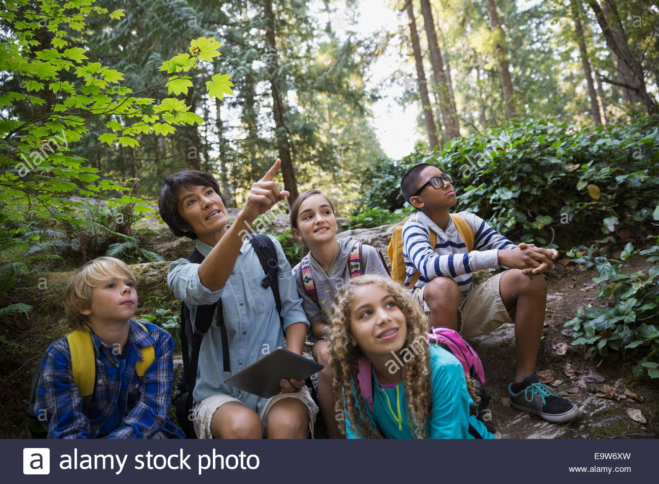 Teacher with children pointing in woods - Stock Image
