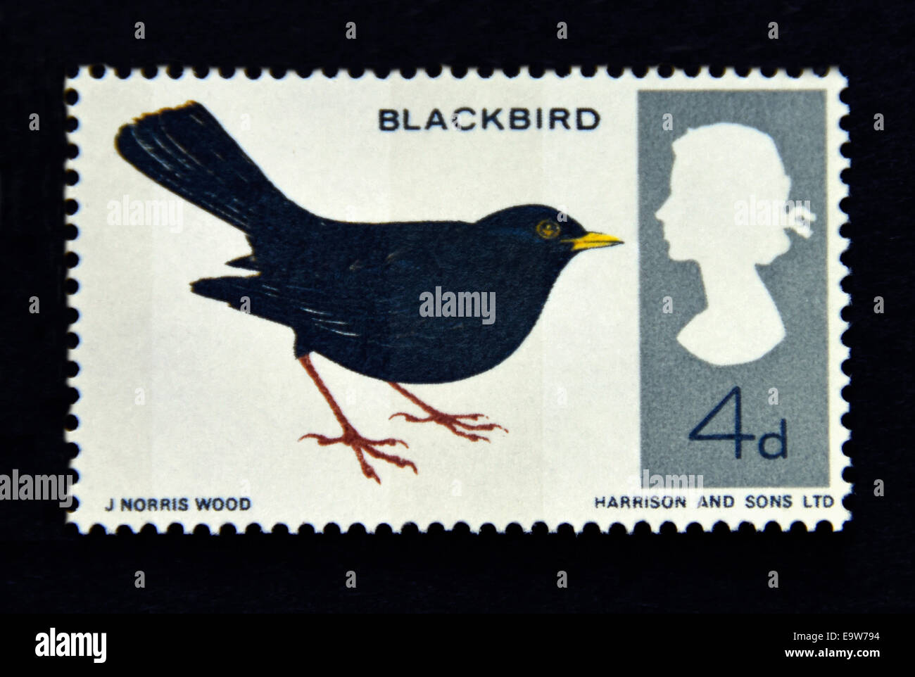 Postage stamp. Great Britain. Queen Elizabeth II. British Birds, Blackbird.1966. - Stock Image