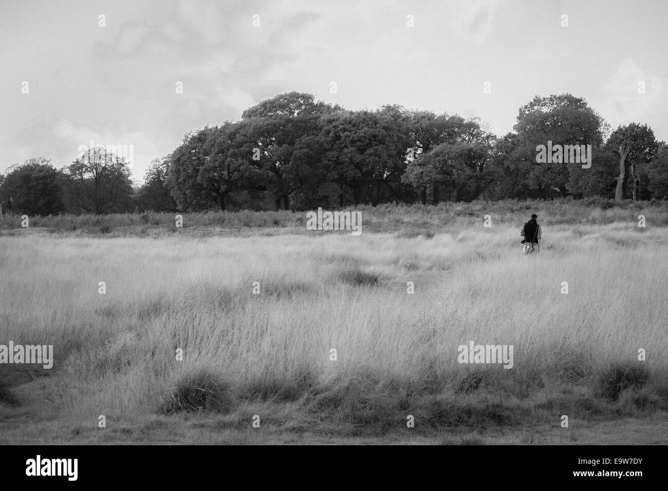 Wandering through Richmond Park - Stock Image