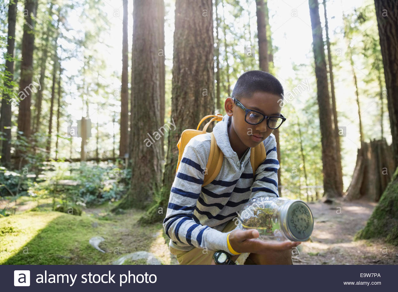 Boy in woods examining plants in jar - Stock Image