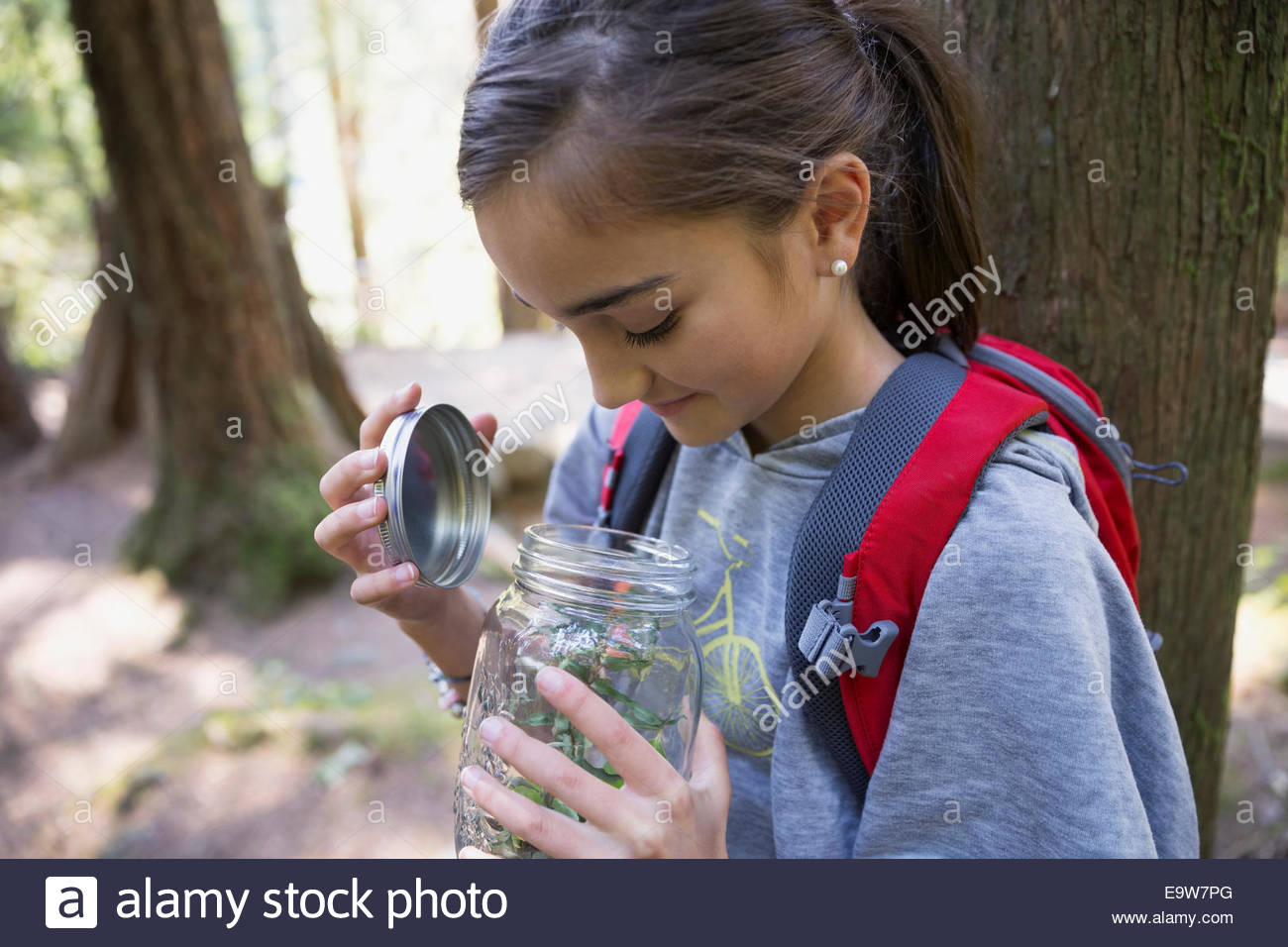 Girl in woods opening jar containing plants - Stock Image
