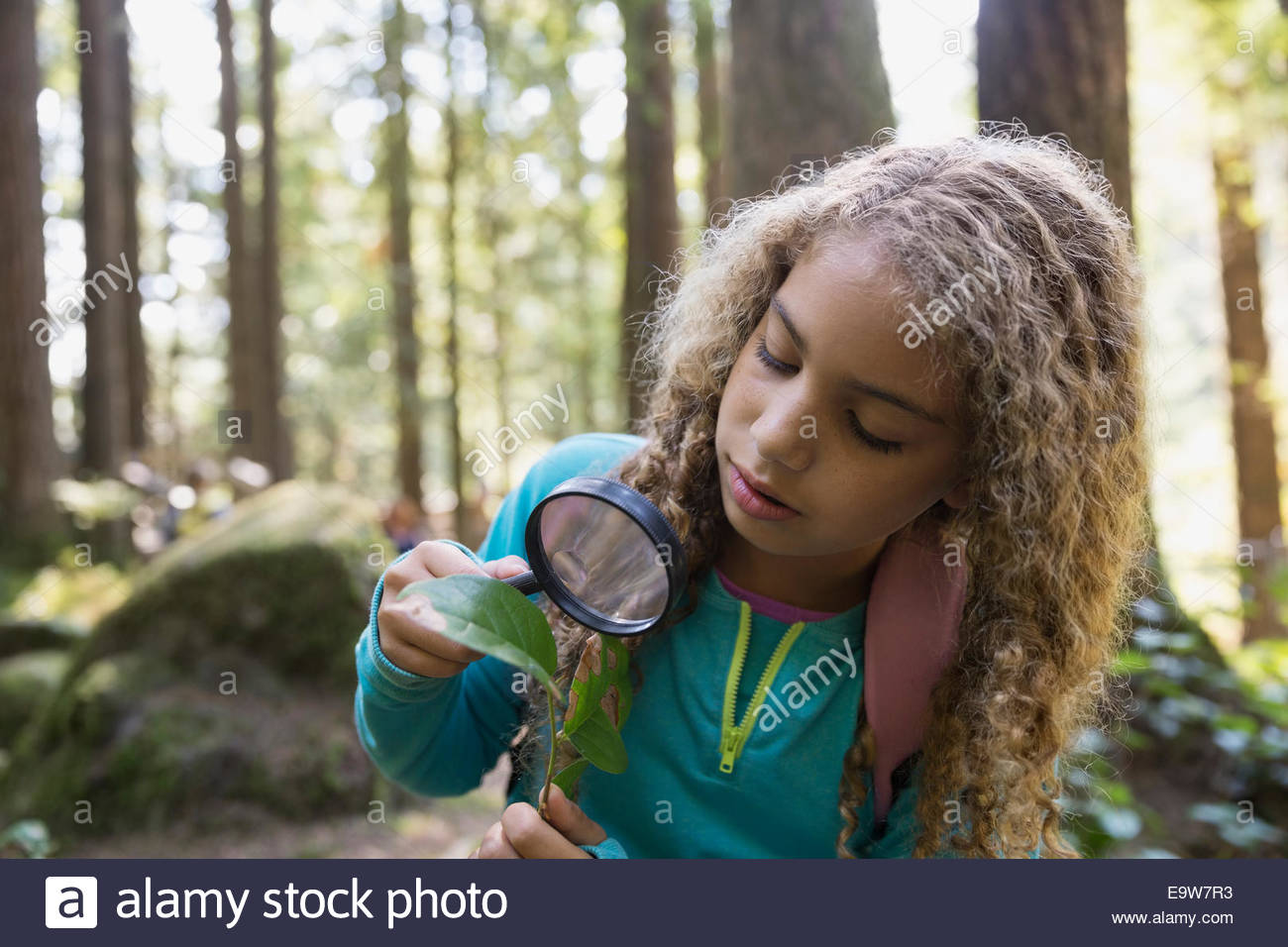 Girl with magnifying glass examining plant leaf - Stock Image