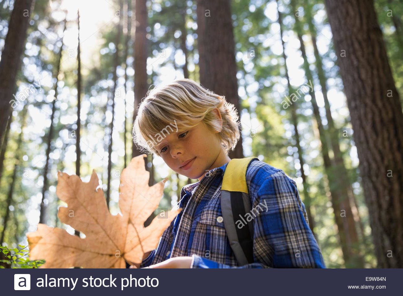 Curious boy examining leaf in woods - Stock Image