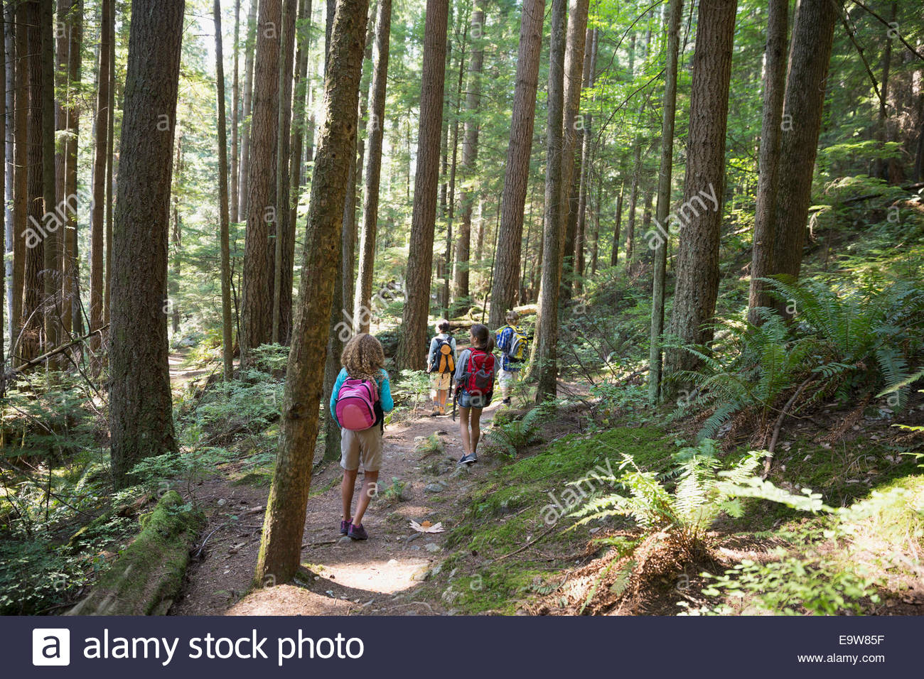 Teacher and children hiking on trail in woods - Stock Image