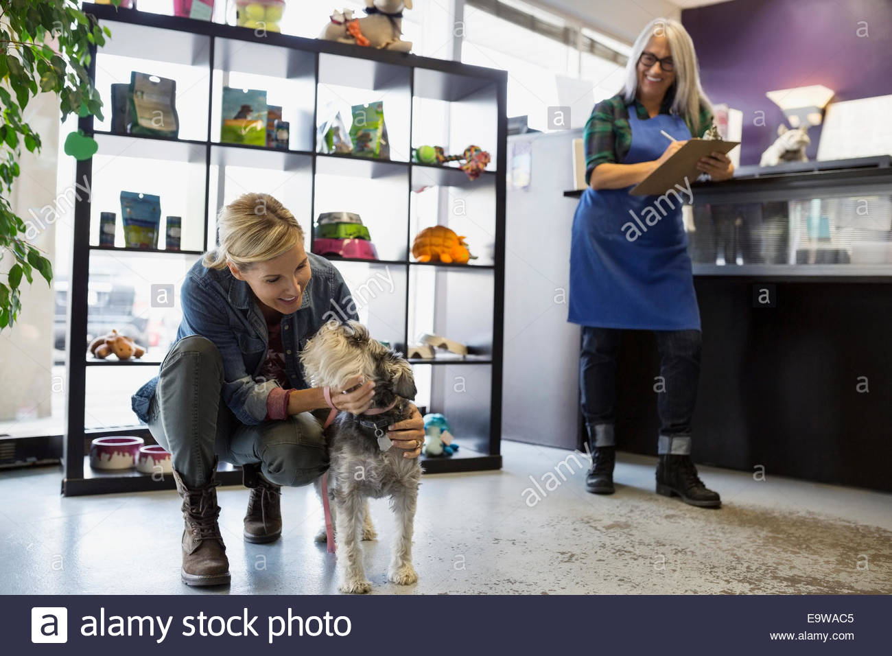 Woman saying goodbye to schnauzer at daycare - Stock Image