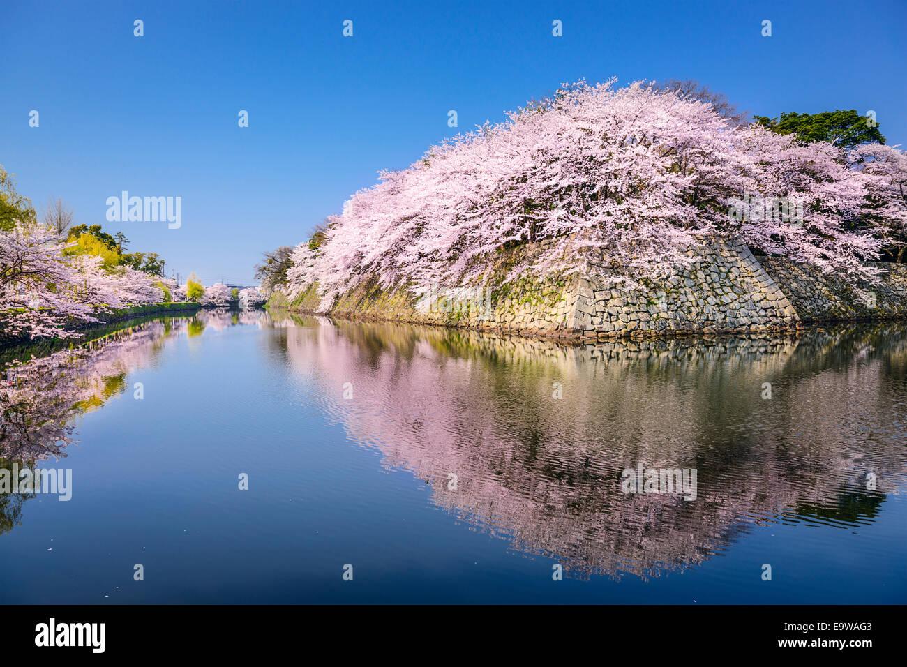 Hikone, Japan sakura cherry trees at Hikone Castle outer moat. - Stock Image