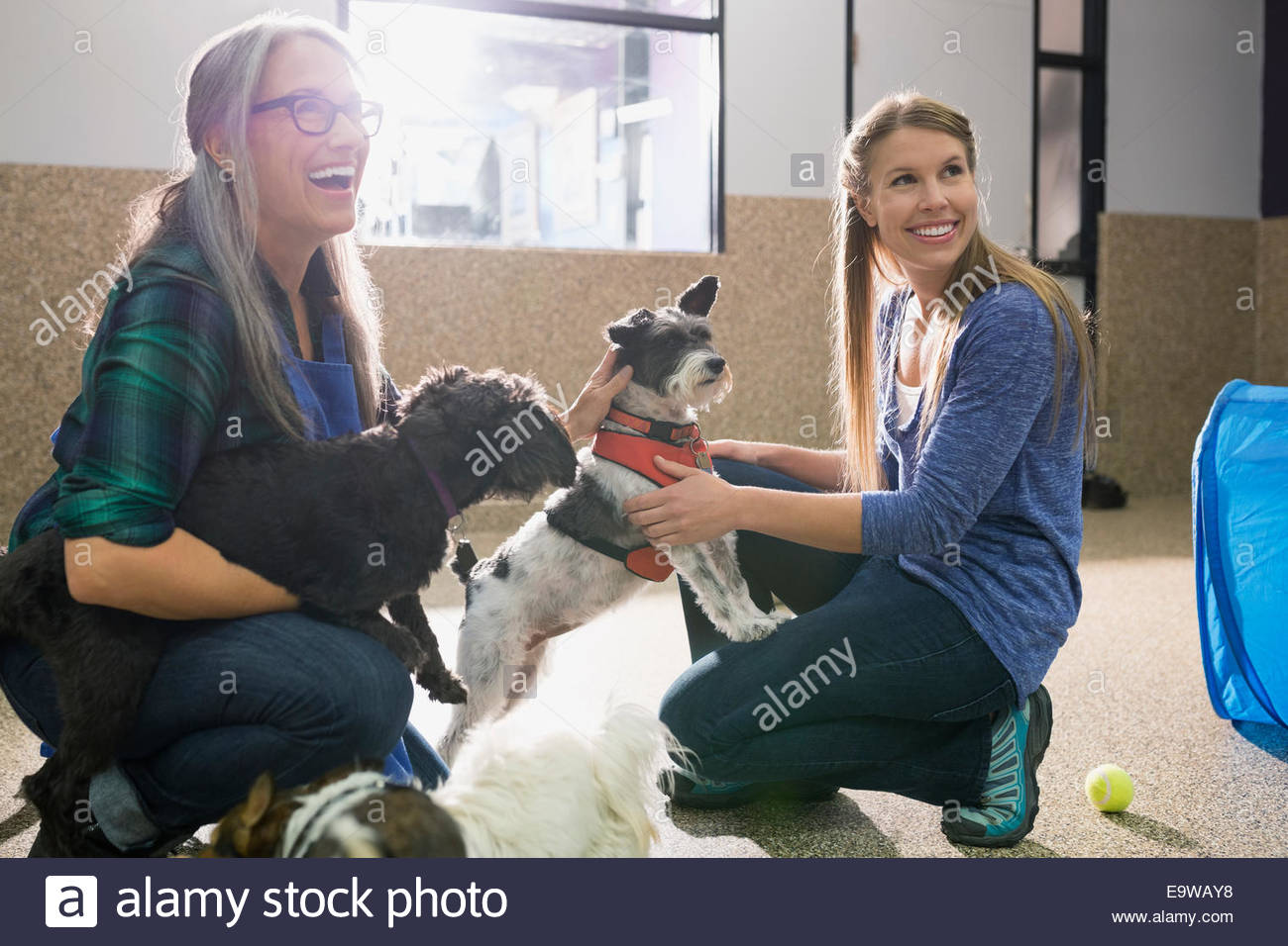 Dog daycare owners playing with dogs - Stock Image