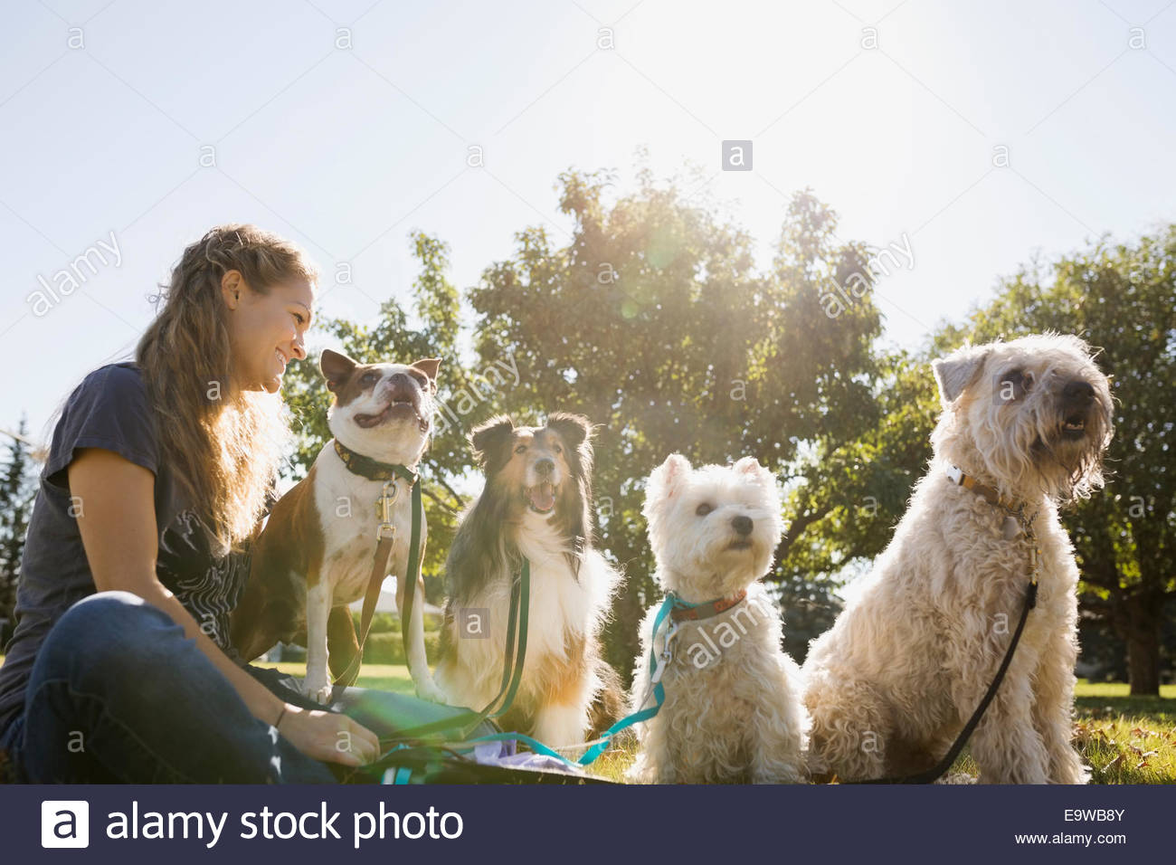 Dog walker sitting with dogs in sunny park Stock Photo