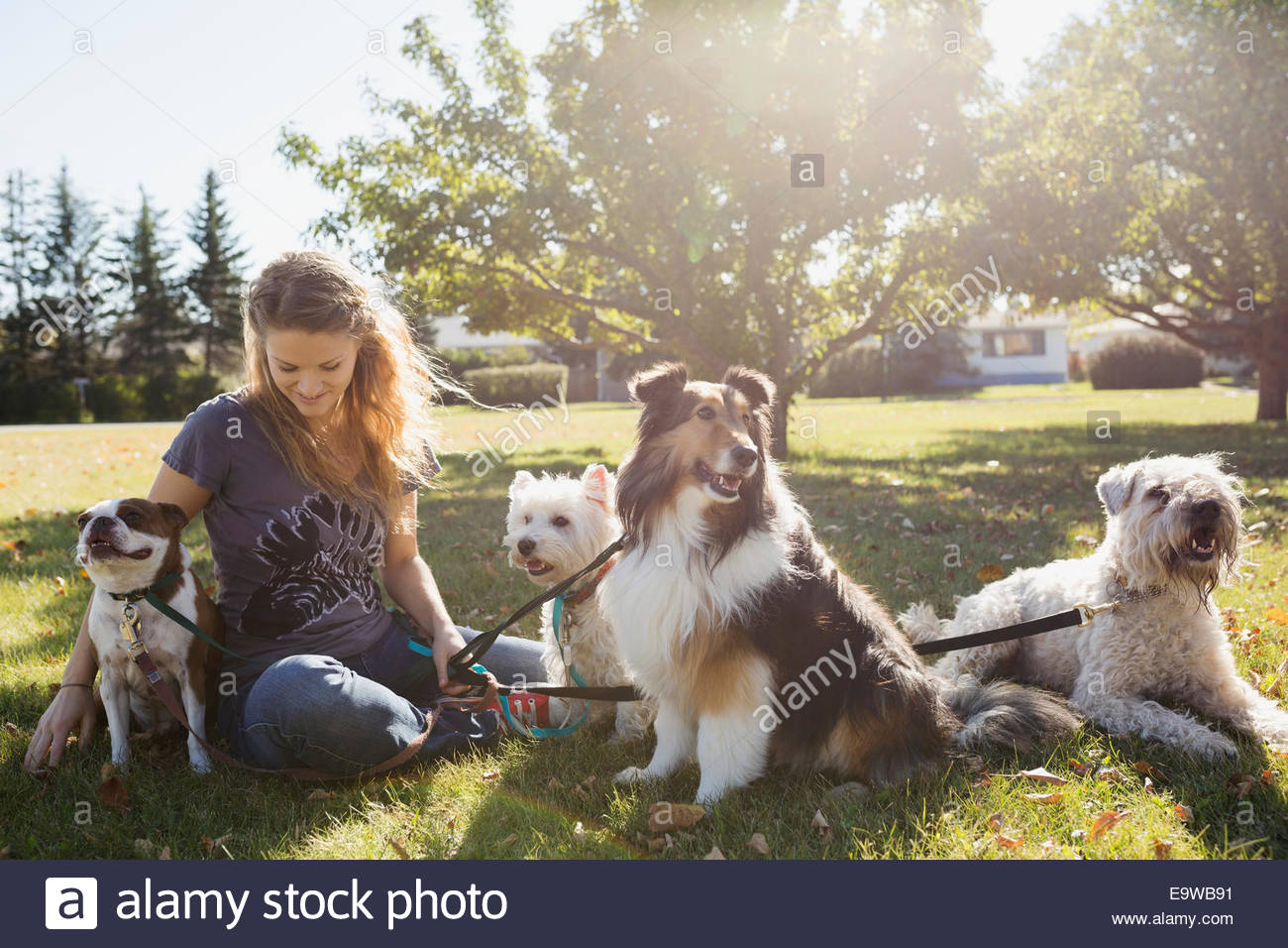Dog walker sitting with dogs in sunny park - Stock Image