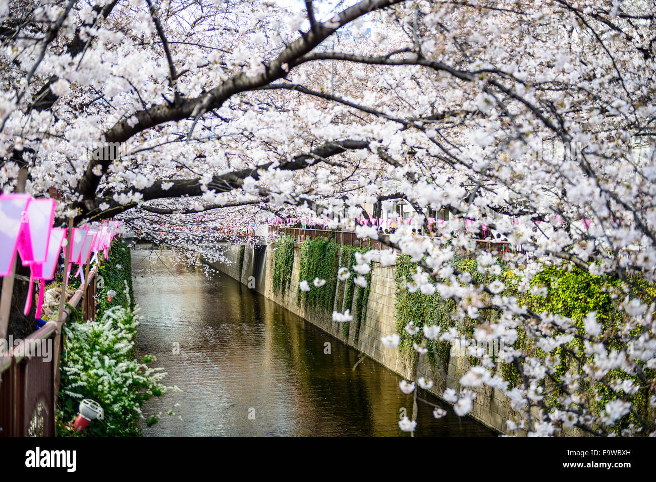 Tokyo, Japan at the Meguro Canal during the spring cherry blossom festival. - Stock Image