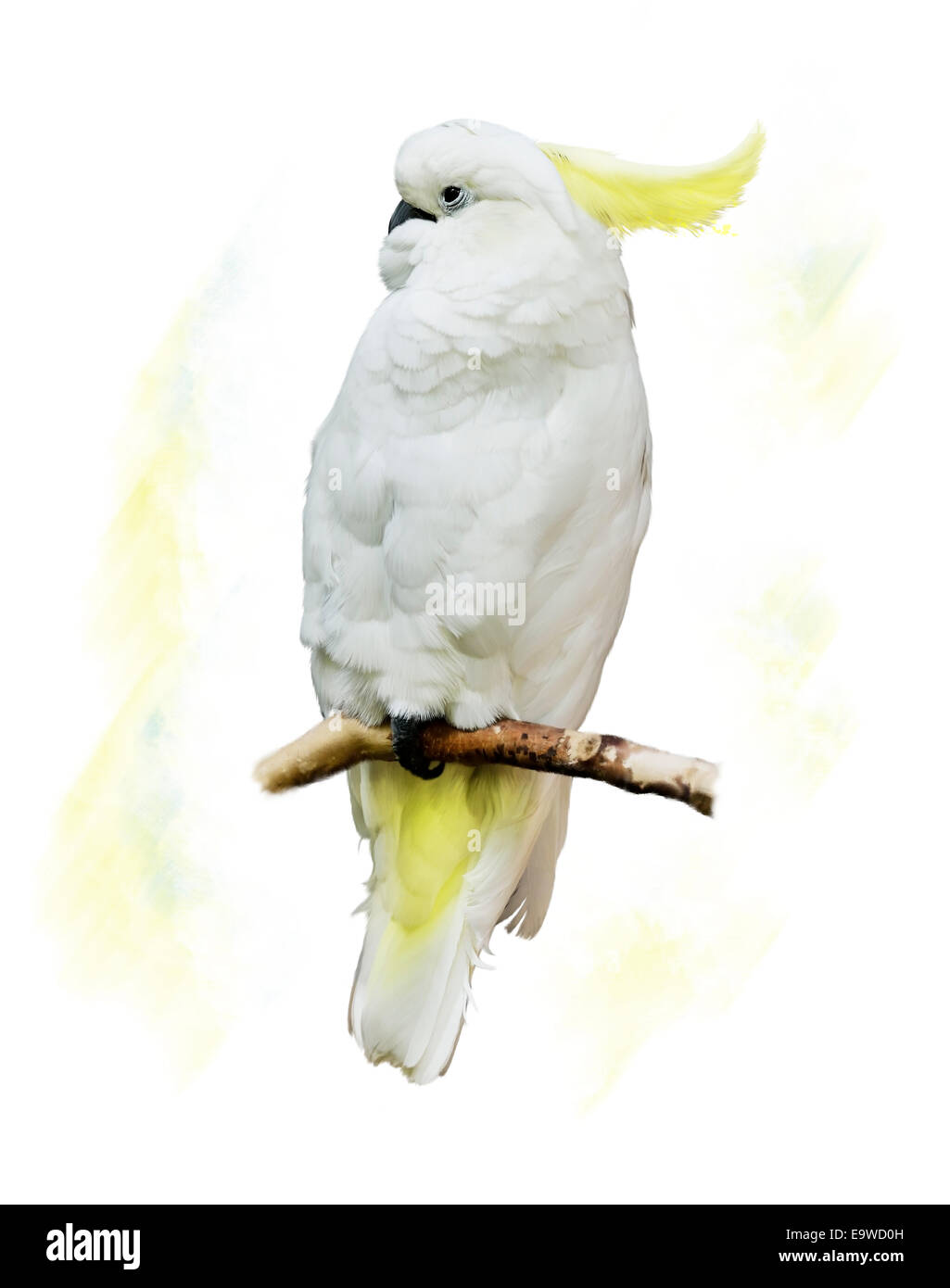 Digital Painting Of White Parrot - Stock Image