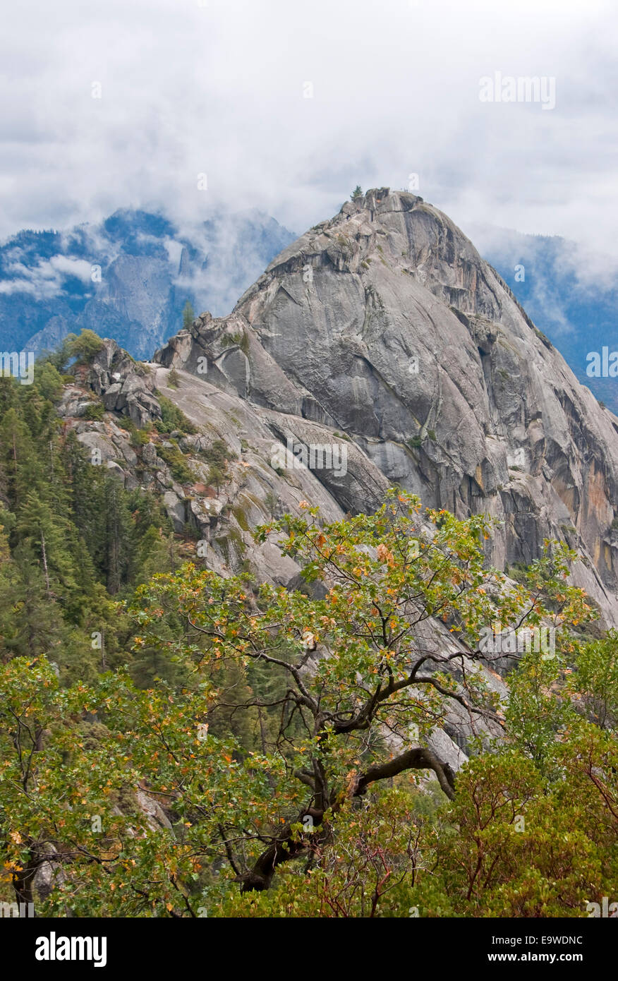 Sequoia National Park's Moro Rock granite dome formation. Stock Photo