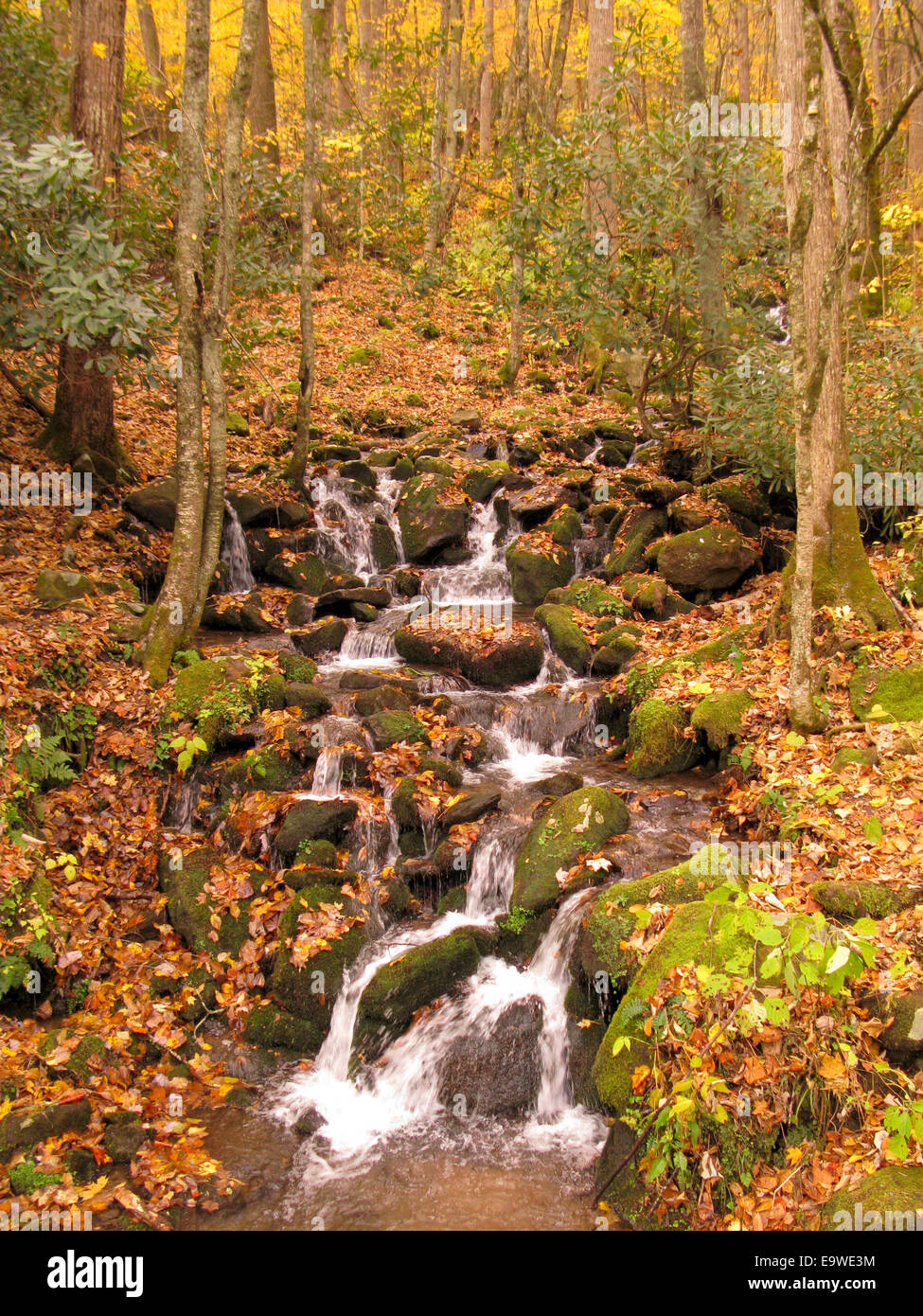Stream during autumn in Great Smoky Mountains National Park. - Stock Image