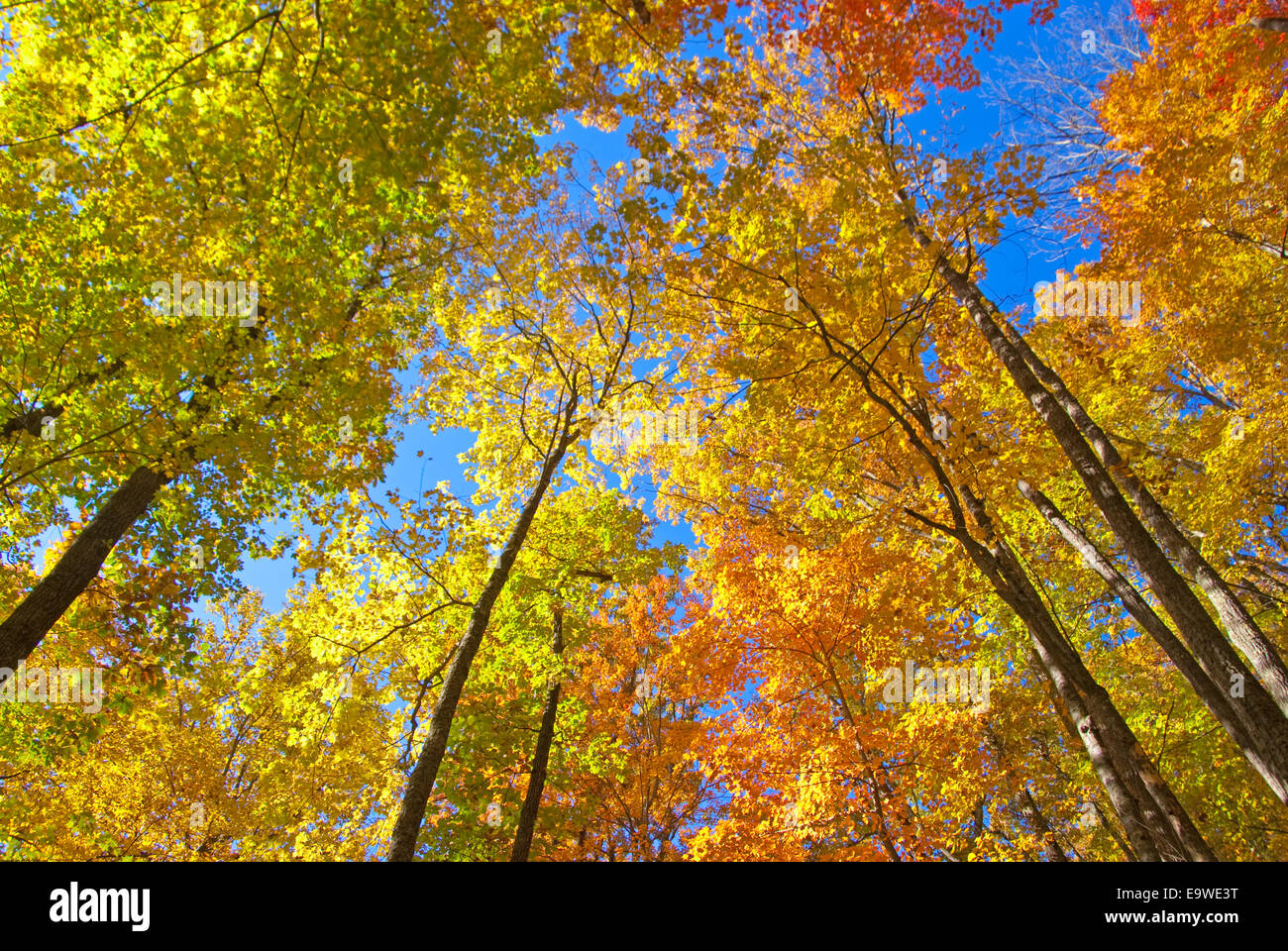Great Smoky Mountains National Park autumn color - Stock Image
