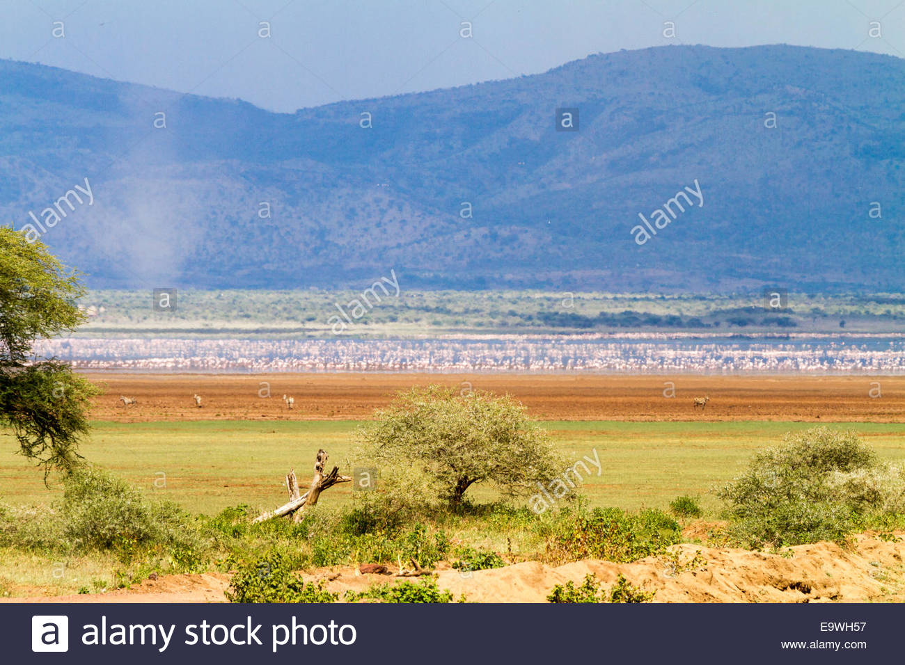 Antelope at Lake Manyara National Park - East Africa - Tanzania - Stock Image