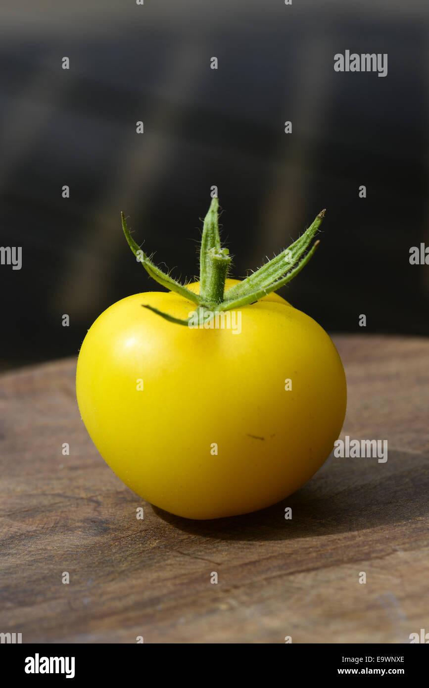 Yellow garden tomatoe, Austria - Stock Image