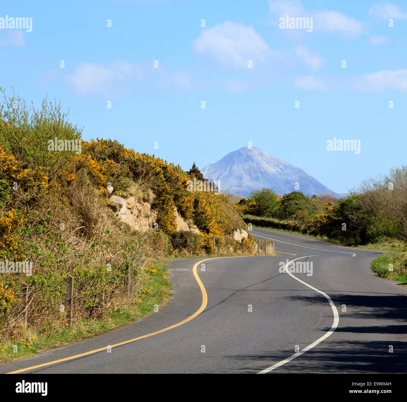 Errigal Mountain, Co. Donegal. A winding road  to Mount Errigal  under a blue summer sky. - Stock Image