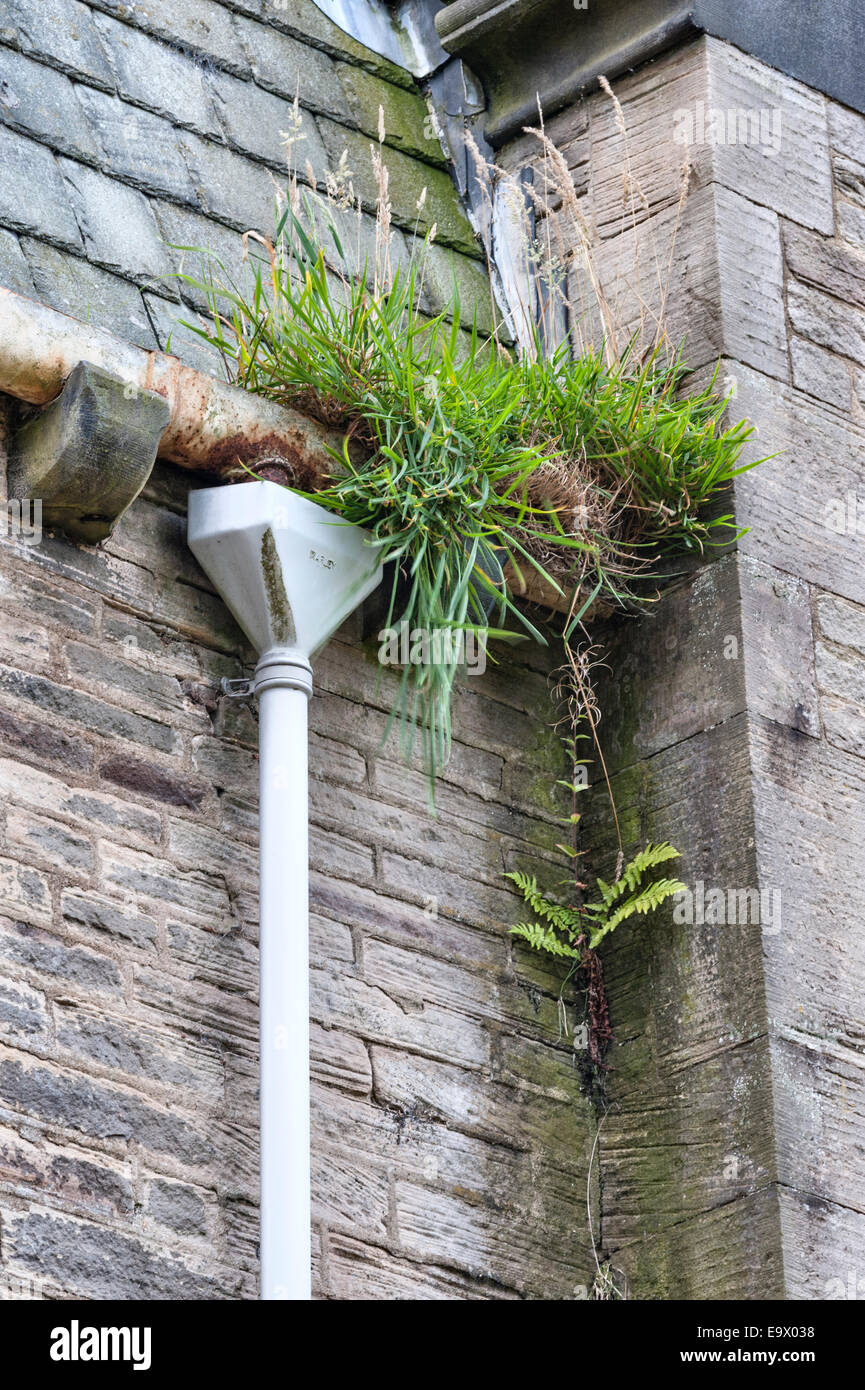 Blocked gutters and downpipes in an abandoned Victorian building, UK - Stock Image