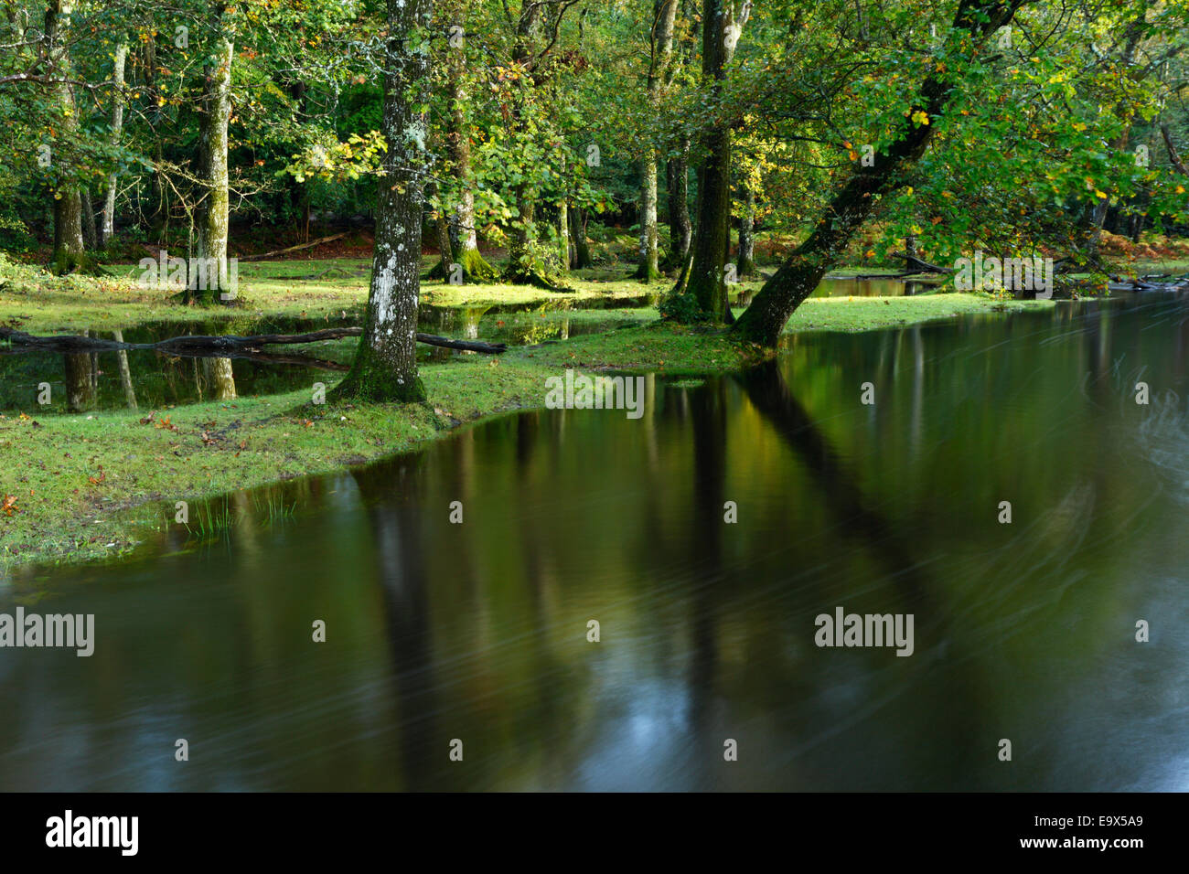 Flooded deciduous woodland at Ober Water. New Forest National Park. Hampshire, UK. Stock Photo