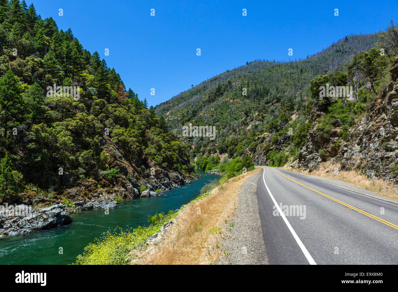 State road 299 alongside Trinity River in Shasta-Trinity National Forest, Northern California, USA - Stock Image