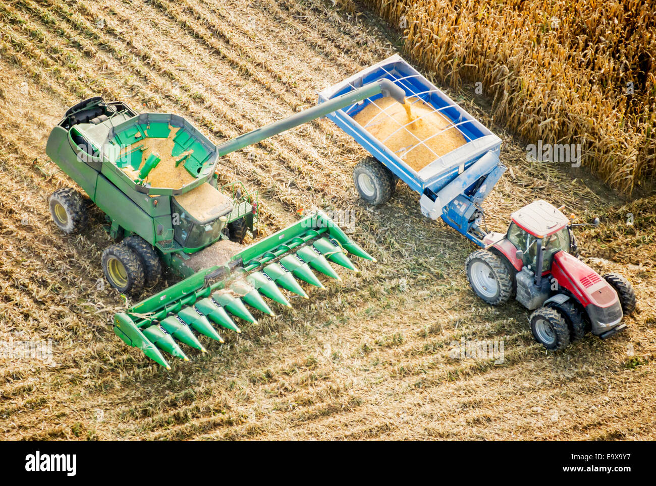 Harvesting corn; Centerville, Maryland, United States of America - Stock Image